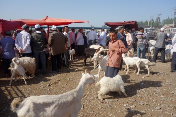 kashgar-livestock-market