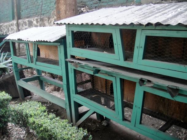 rabbit-cages-leon-trotsky-home-mexico-city