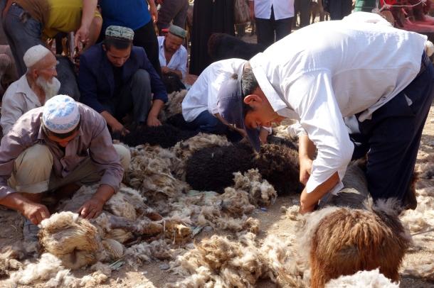 sheep-shearing-kashgar-livestock-market