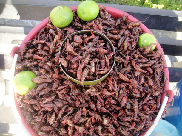 roasted-grasshoppers-mexico