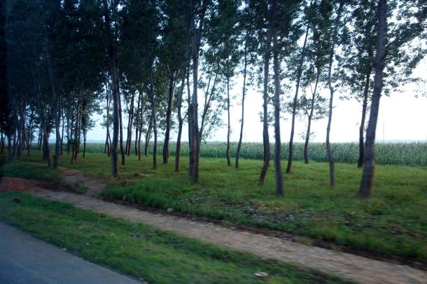 trees-along-north-korean-highway