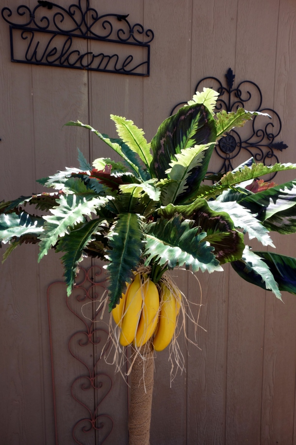banana-tree-molossia