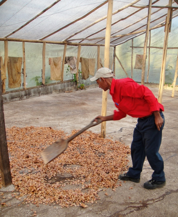 cocoa-bean-processing