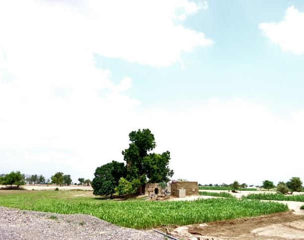 farm in yemen
