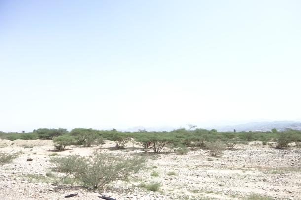 yemen-desert