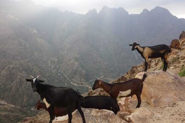 the-mountains-of-yemen-as-a-local-goat-herder-in-this-remote-region-explained-to-us-many-yemenis-care-little-about-the-outcome-of-the-war-they-just-want-to-be-left-alone