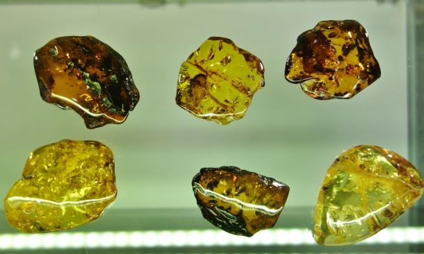 amber-samples-Kaliningrad-Amber-Museum
