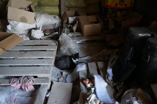 cat-in-destroyed-home-eastern-ukraine
