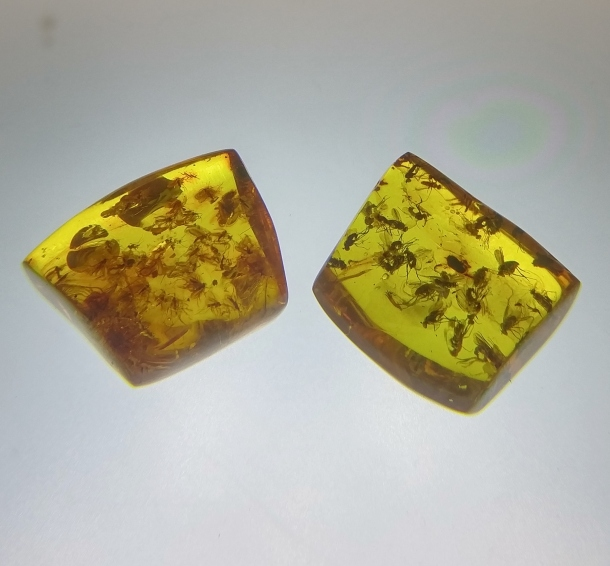 insects-trapped-in-amber